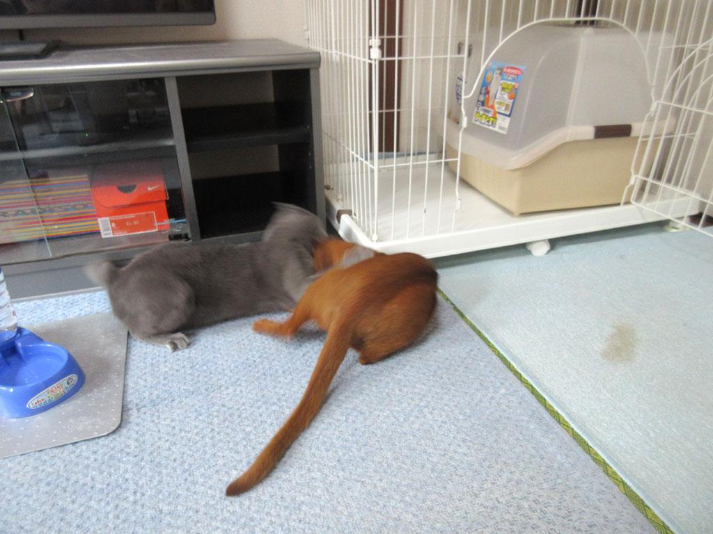 楽しそうな我が家の猫たち。