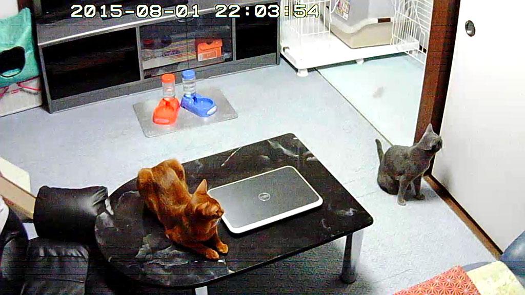 晩ご飯待ちの我が家の猫たち。