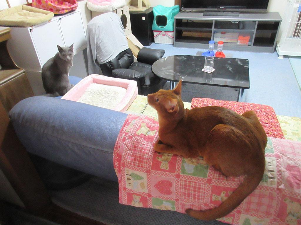 猫たち、おはよー!