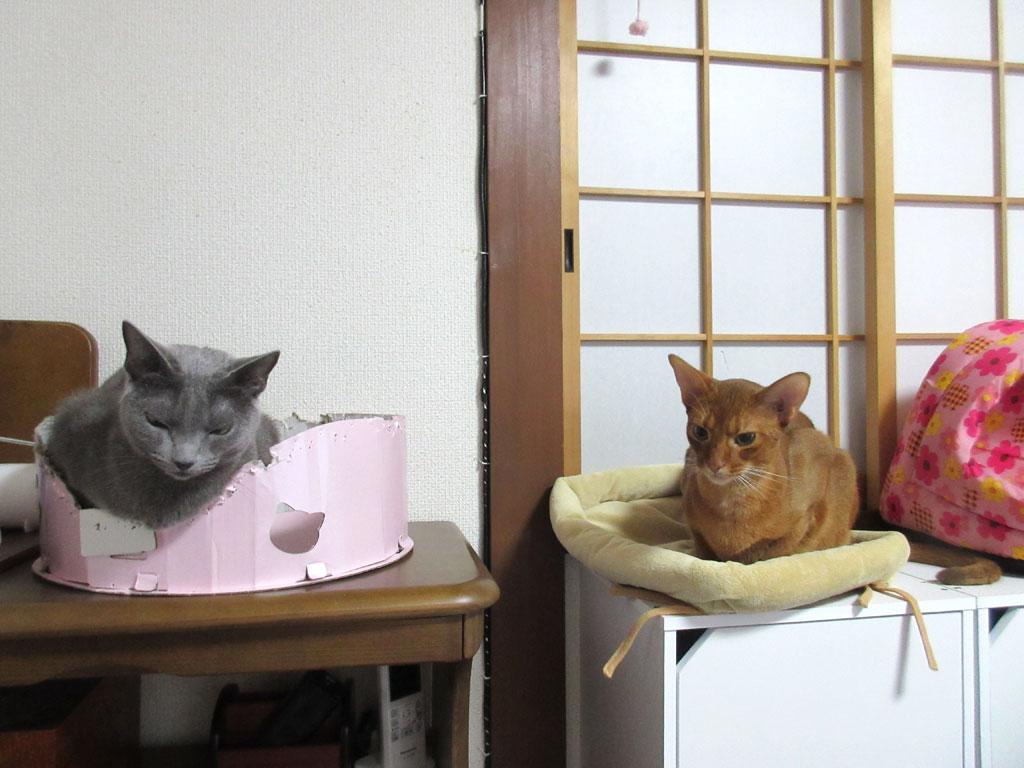 我が家の猫ちゃんたち。