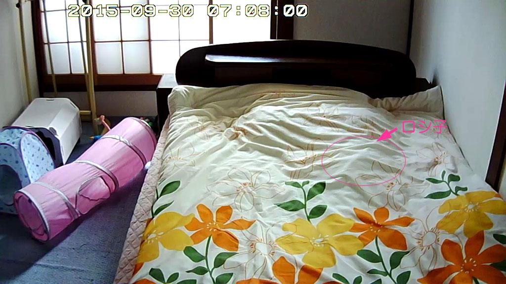 布団の中で寝てるロシ子。