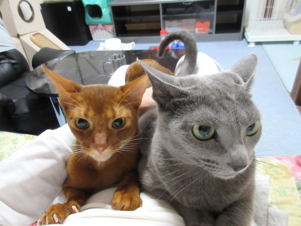 かわいい我が家の猫たち。