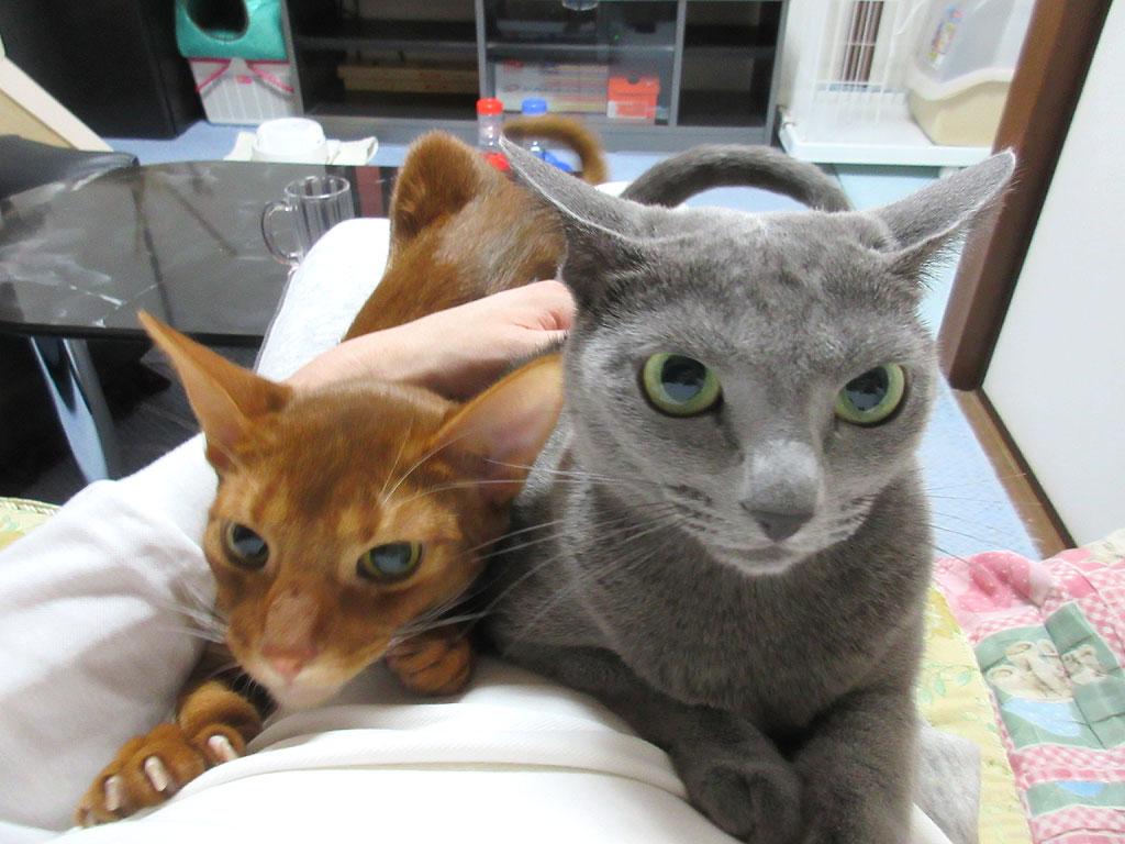 我が家のかわいい猫たち。