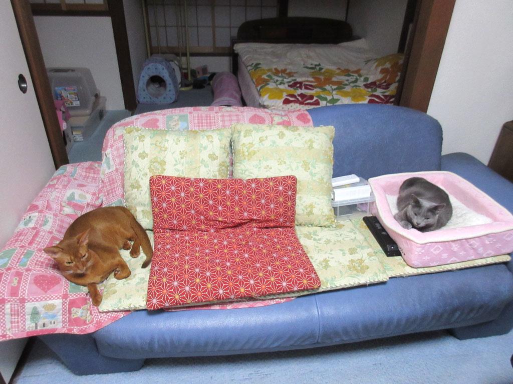 昨日の夕方の我が家の猫たち。