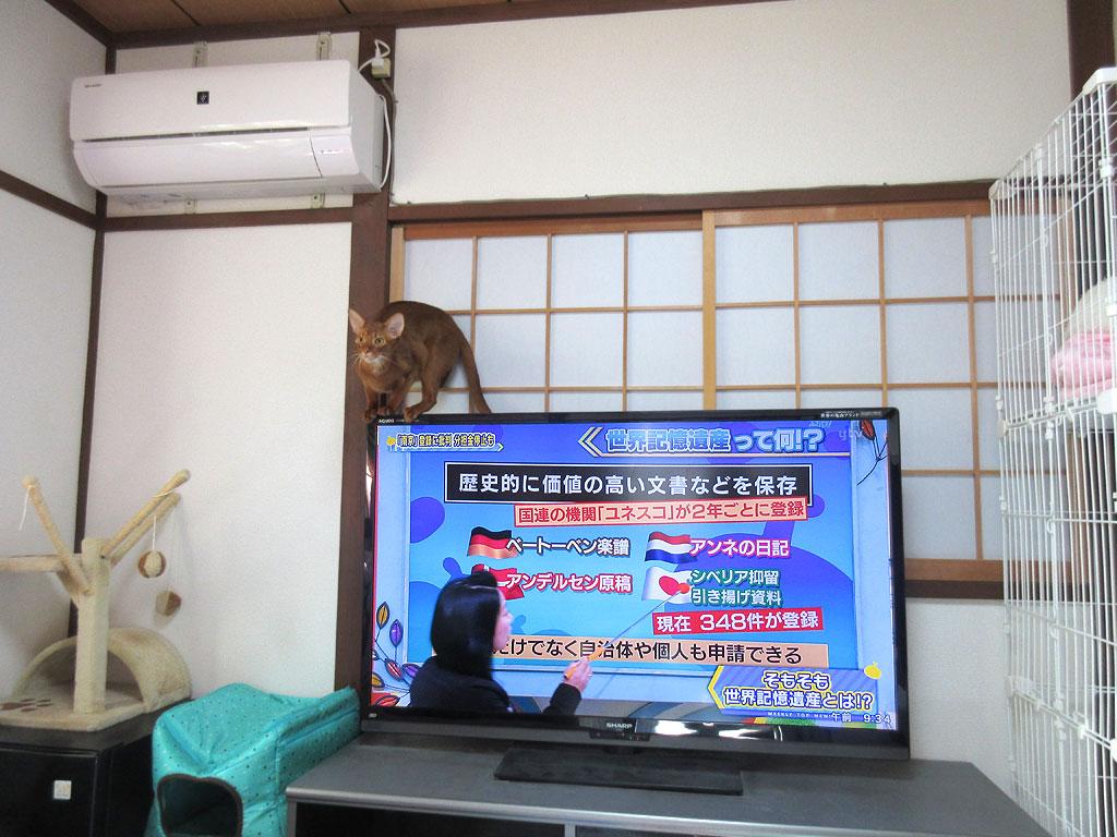 テレビの乗るアビのすけ。