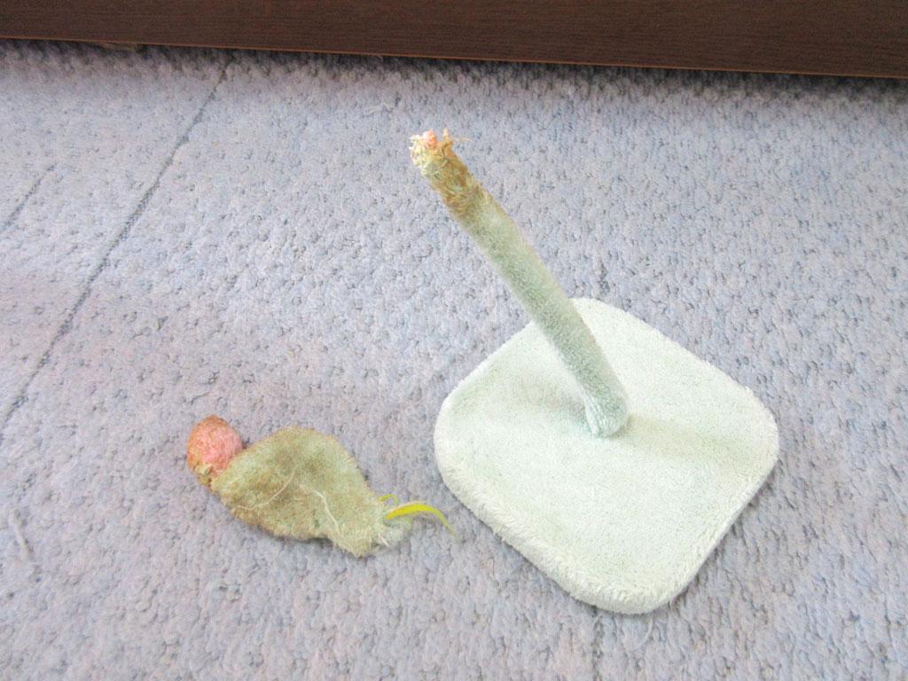 壊されたおもちゃ。