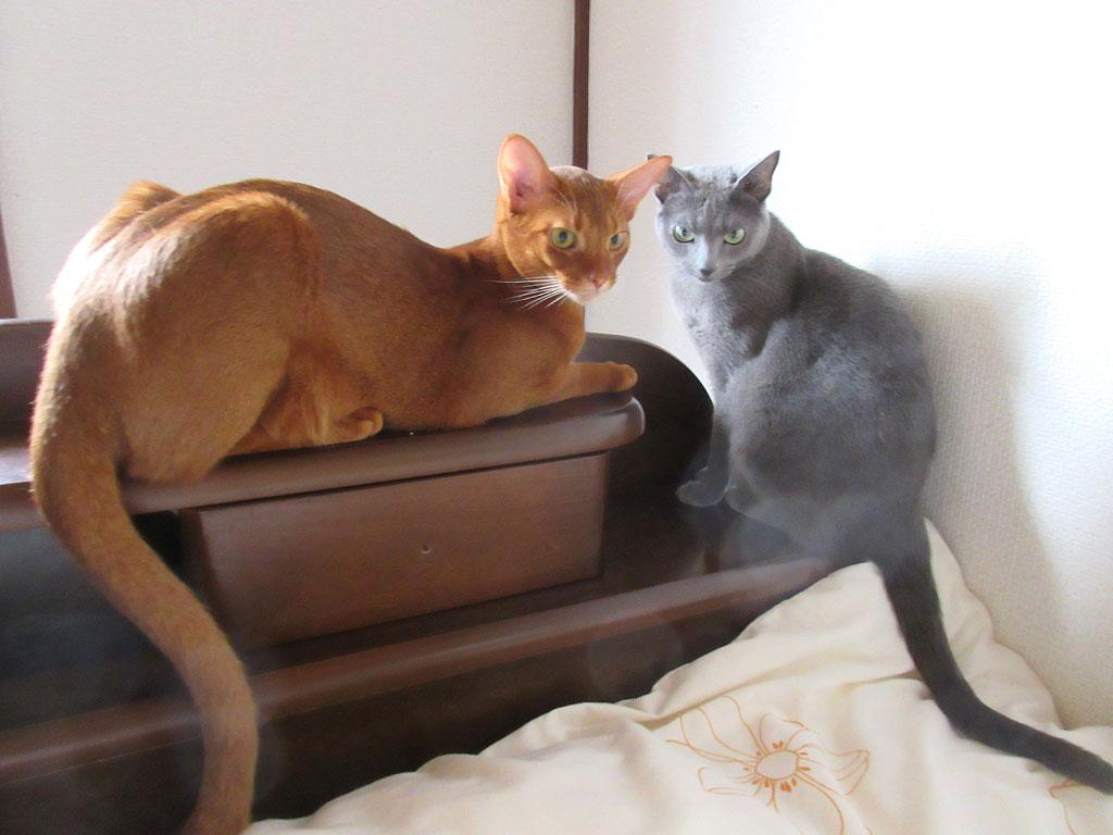 仲良くなった我が家の猫たち。