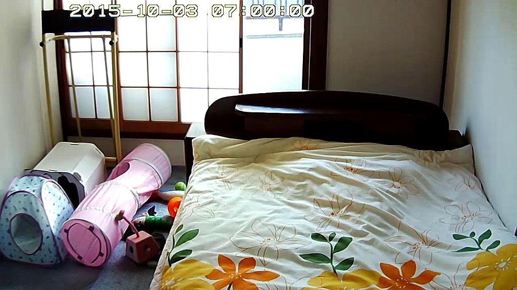 ロシ子が布団の中で寝てます。