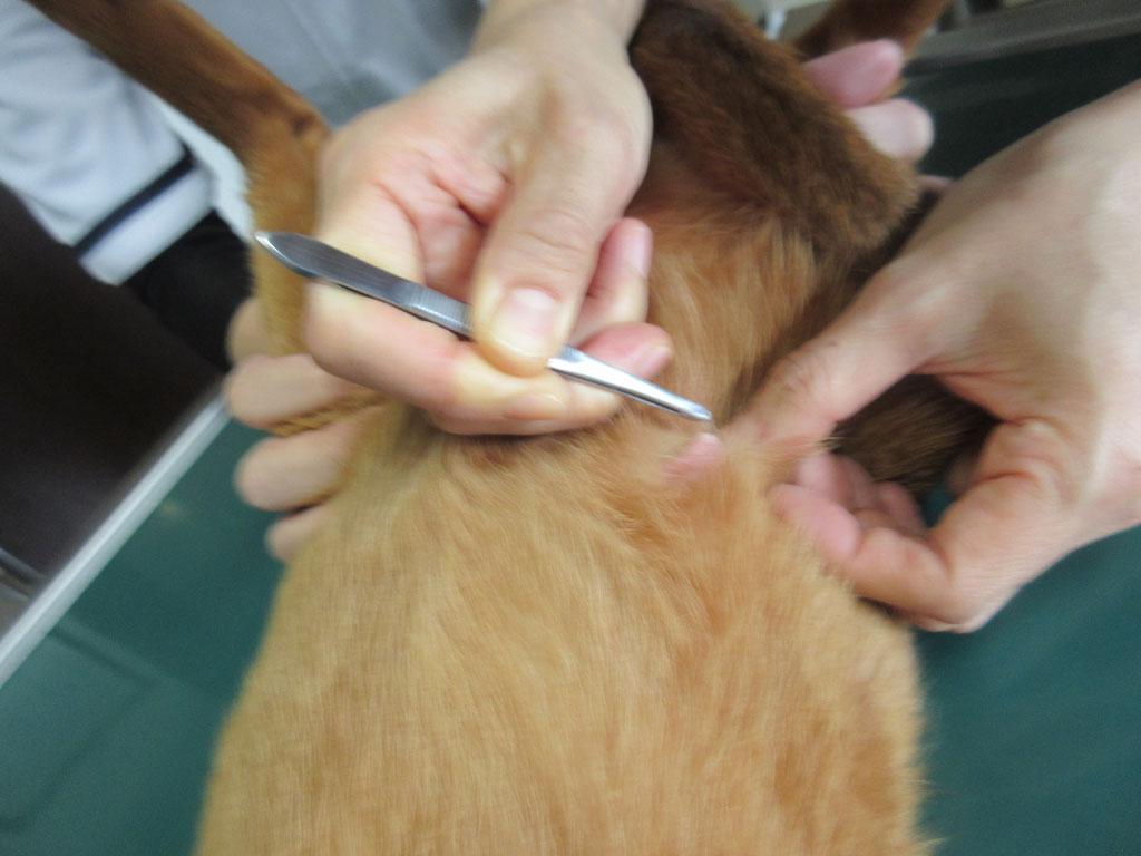 アビのすけの皮膚の検査。