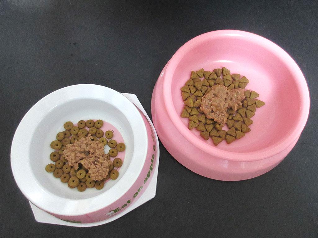 ロシ子とアビのすけのご飯。