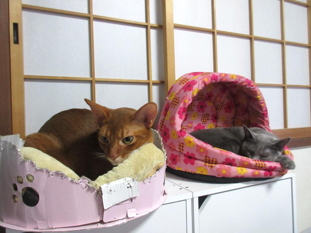 大きい猫ベットを買うか検討中。