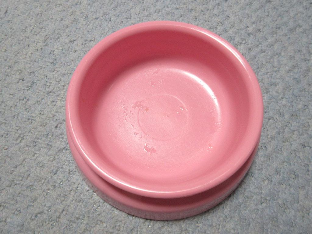 一滴も残っていないアビのすけのお皿。
