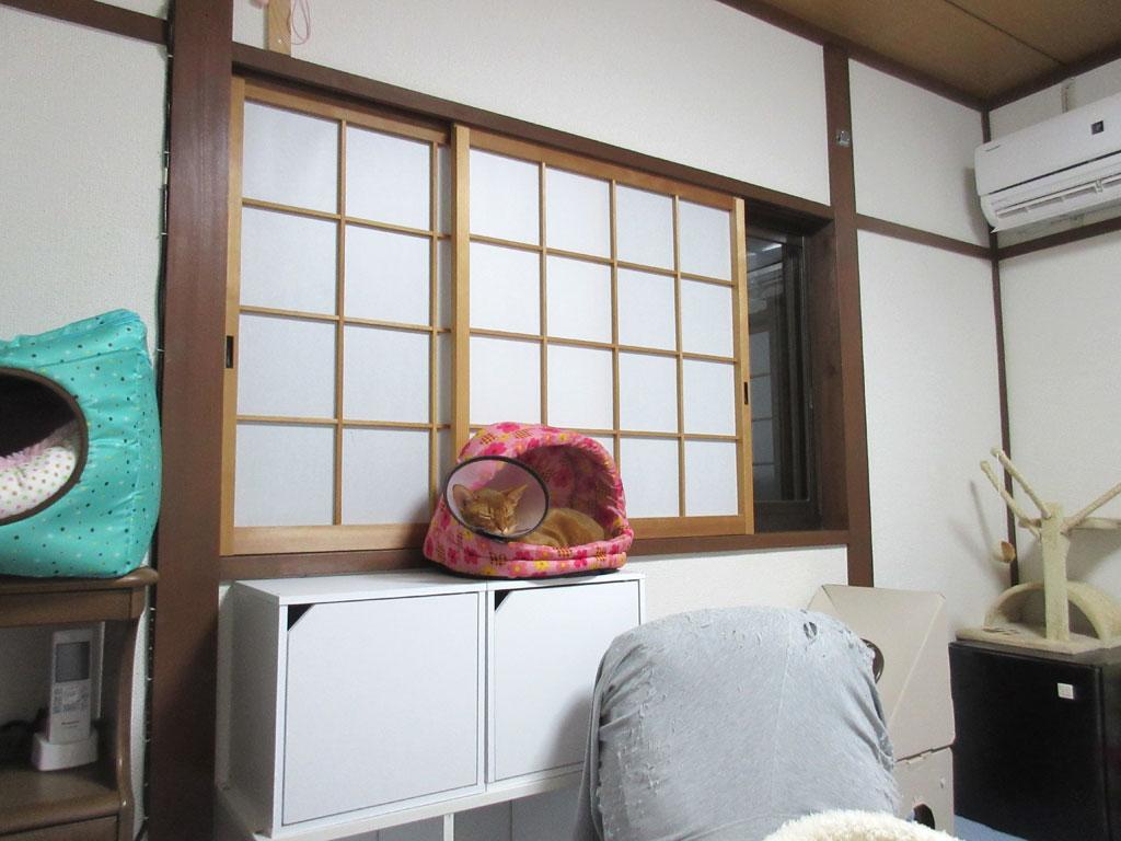 気持ち良く寝ているアビのすけ。