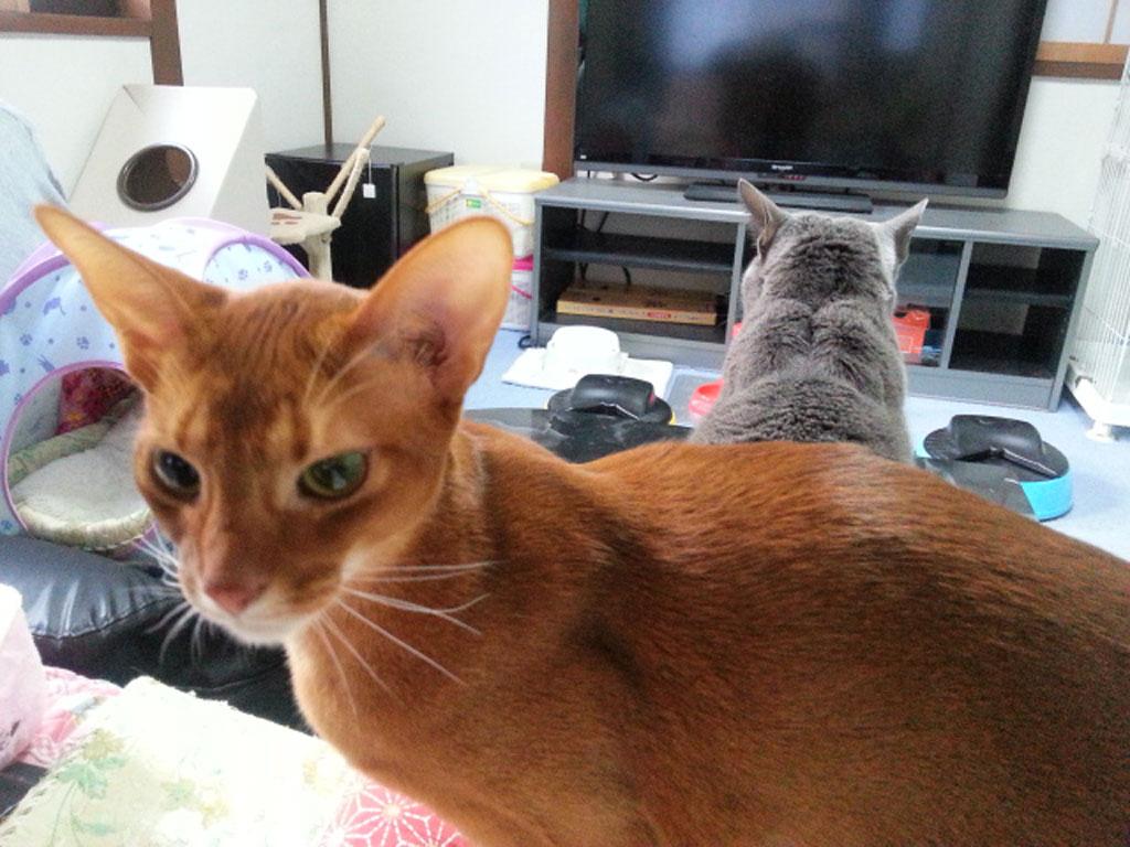 我が家の猫たちの良い写真。