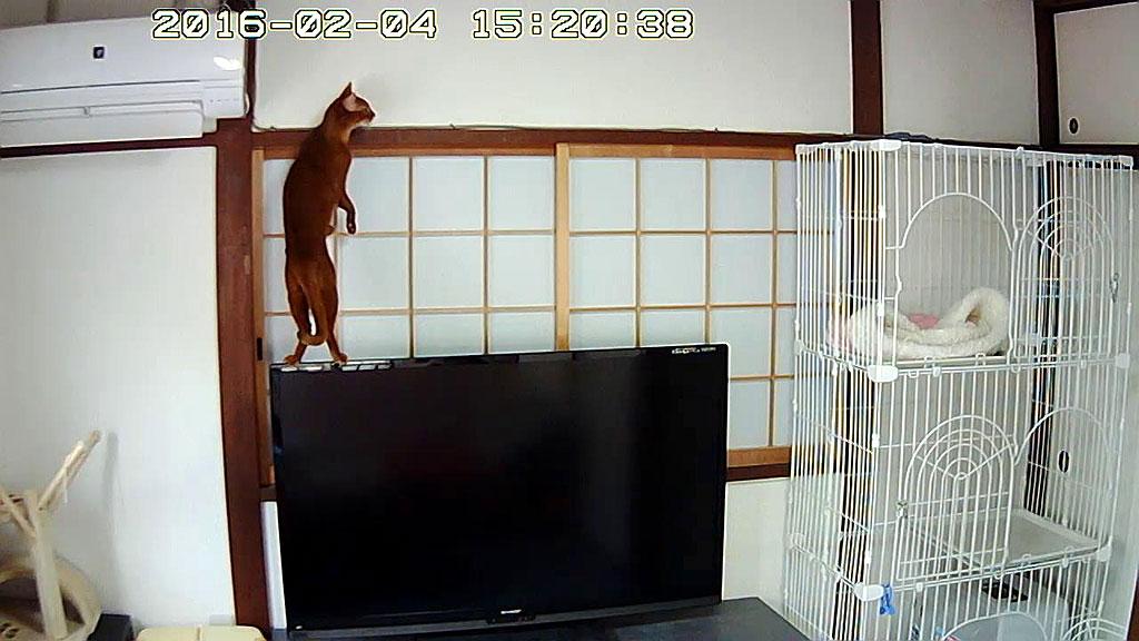 テレビの上に乗るのが当たり前。