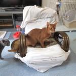 回転座椅子と猫たち。