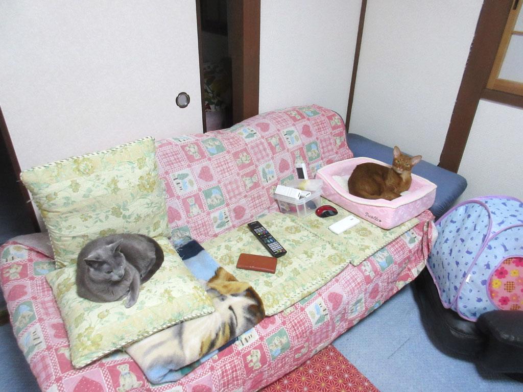 まったりと過ごす猫たち。