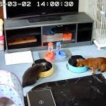 今日の我が家の猫たちのお昼ご飯。