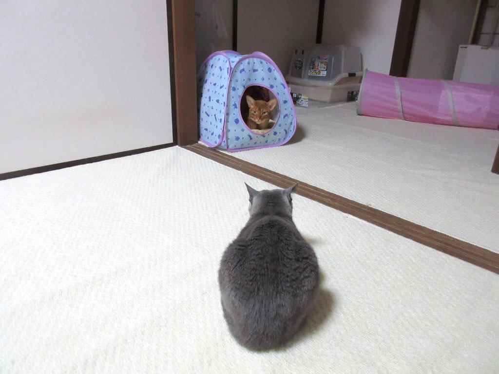 ロシ子と面と向かっているアビのすけ。