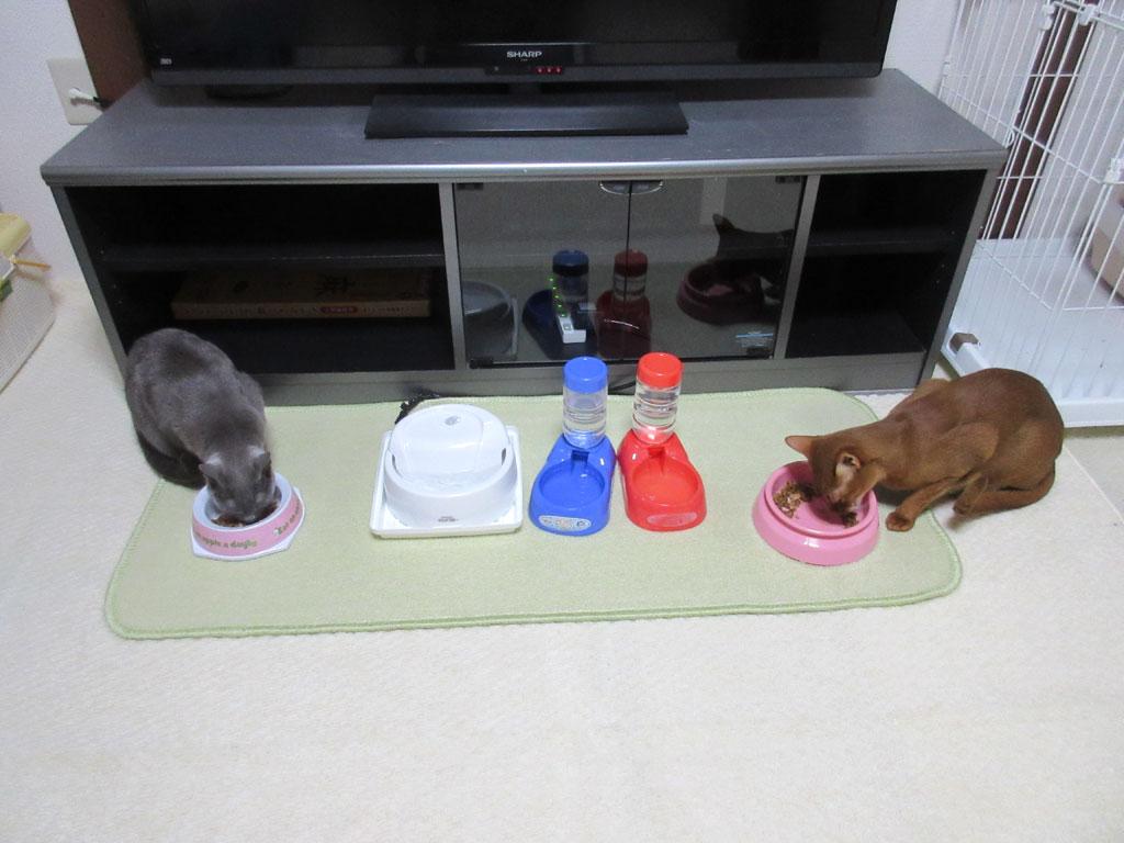 我が家の猫たちの晩ご飯の風景。