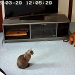 プチ模様替え中の猫たち。