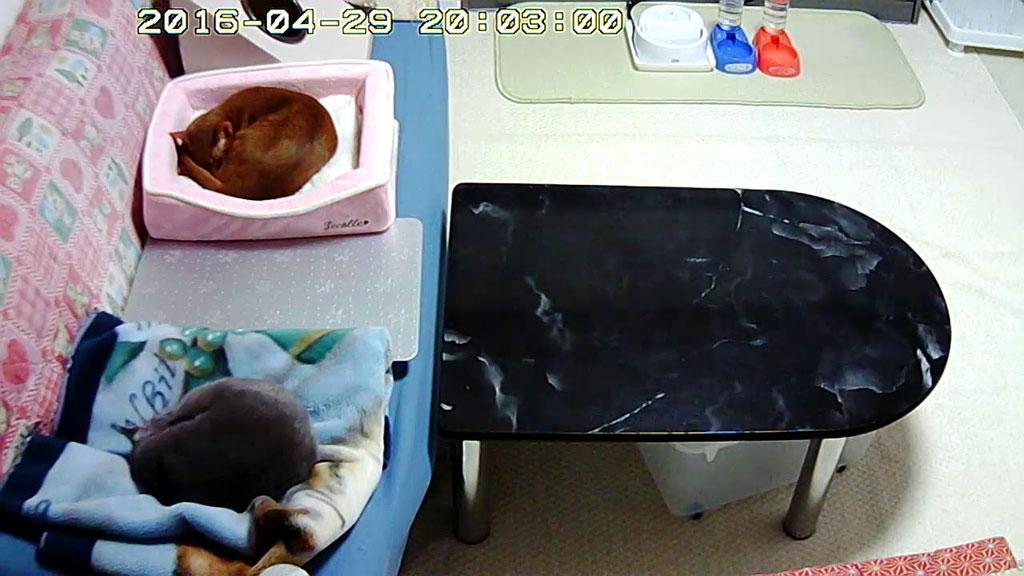 丸まって寝ている猫たち。