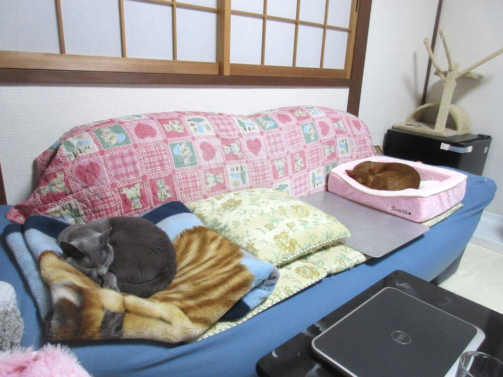おとといの晩の我が家の猫たち。