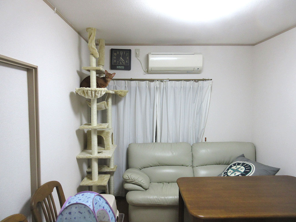 キャットタワーの最上階のアビ。