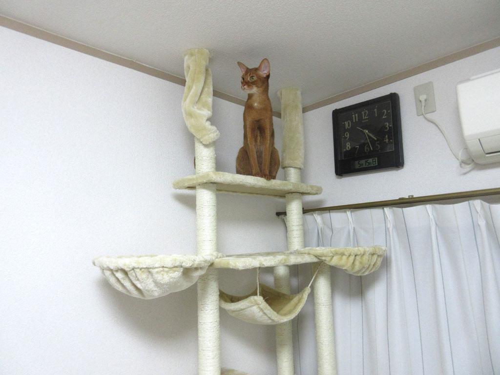 最上階のアビのすけ。