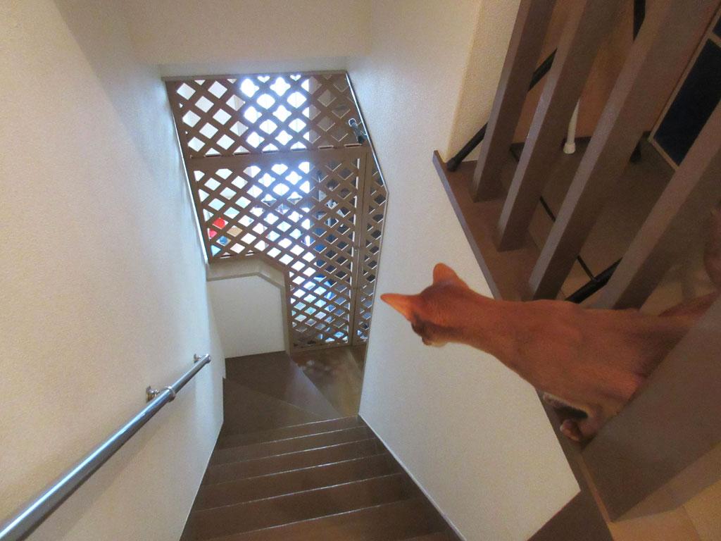 1階を見下ろすアビシニアン。