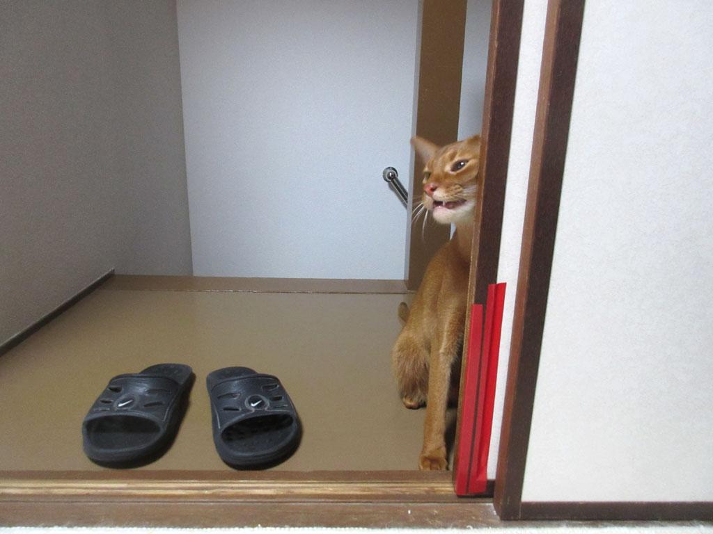 戸にスリスリのアビのすけ。