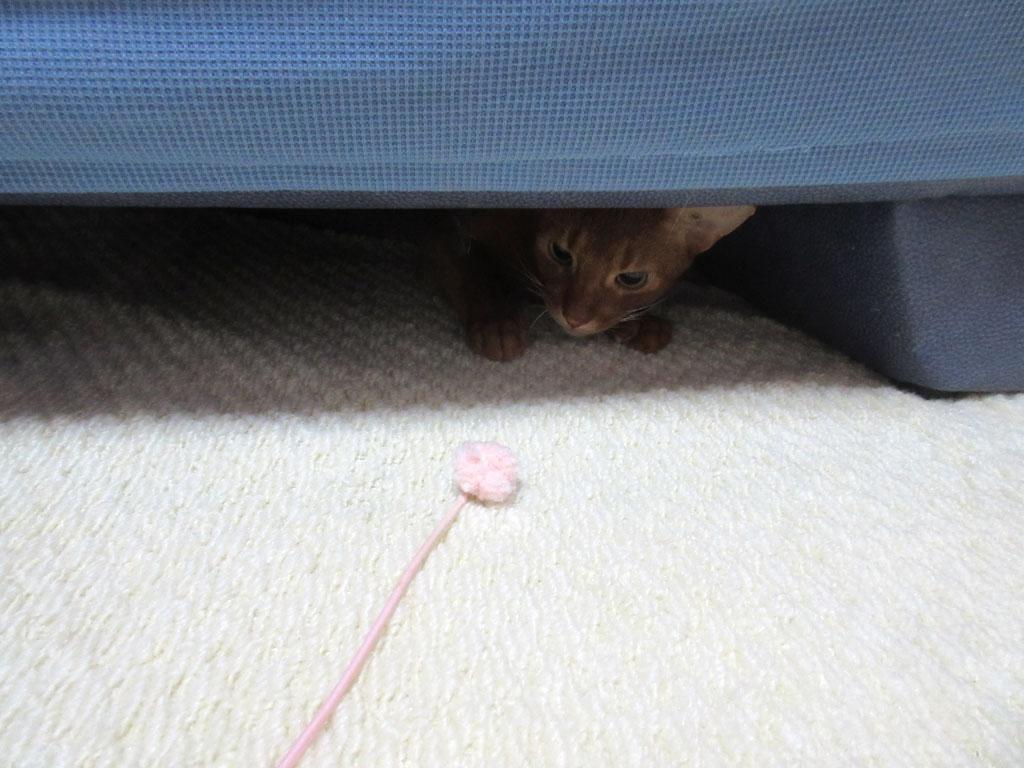 ソファーの下が大好きなアビのすけ。