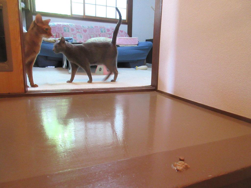ウロウロする猫たち。
