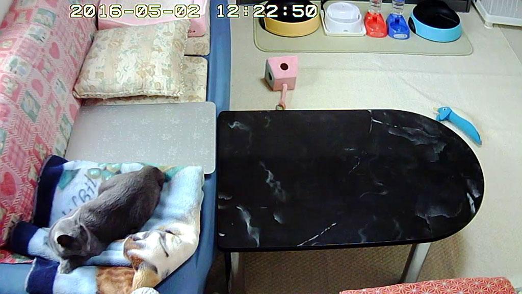 グデッと寝ていたロシ子さん。