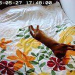 アビのすけの豪快な寝相。