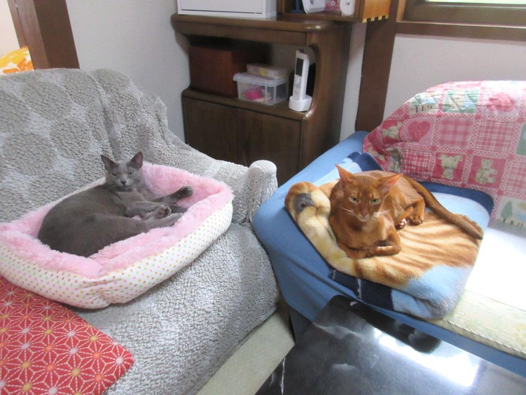 おっさんとおばはんみたいな猫たち。