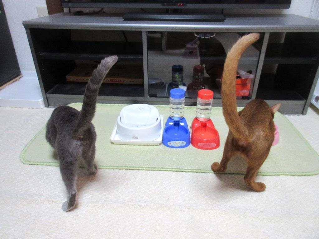 肛門丸見えの猫たち。