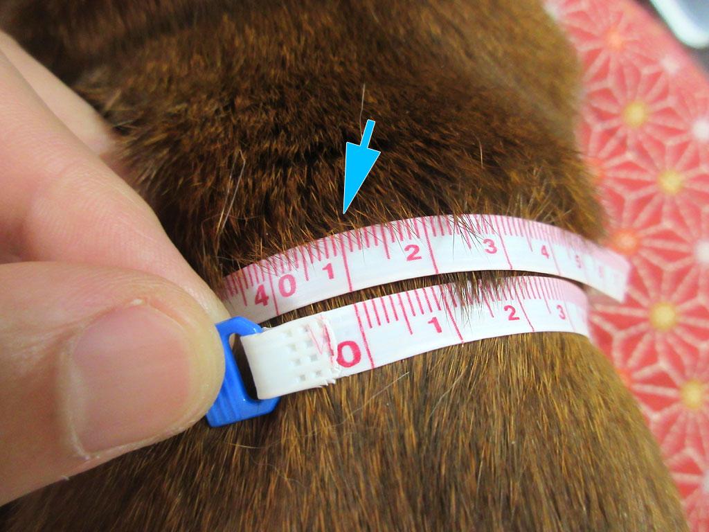 アビのすけの第9肋骨周りは41cm。