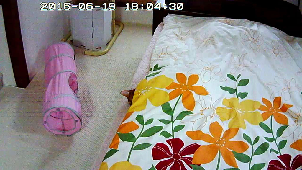 布団を被って寝ているアビのすけ。