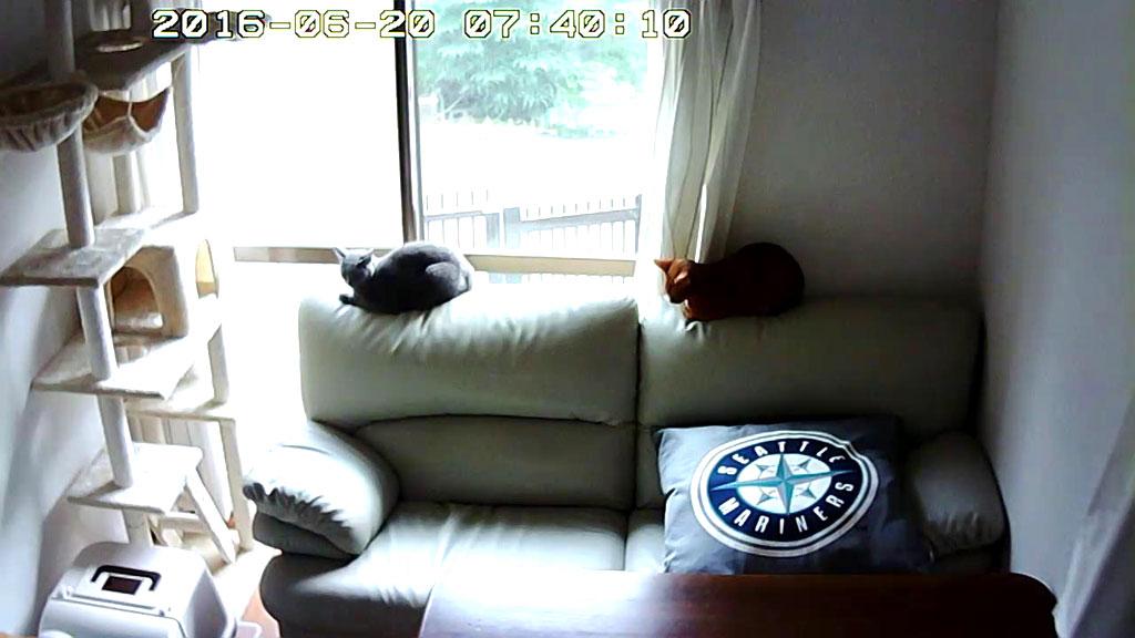 うたた寝している2にゃん。