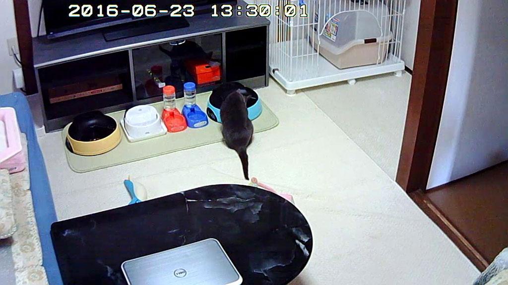 ロシ子がアビのすけの自動給餌器に。