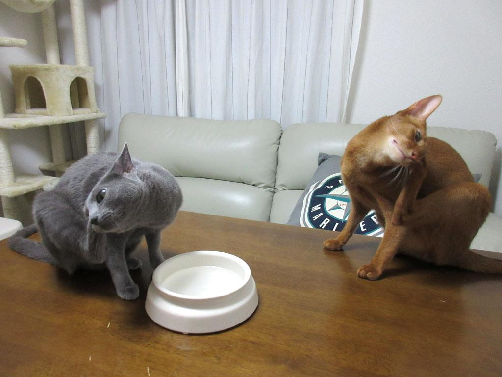 シンクロしている猫たち。