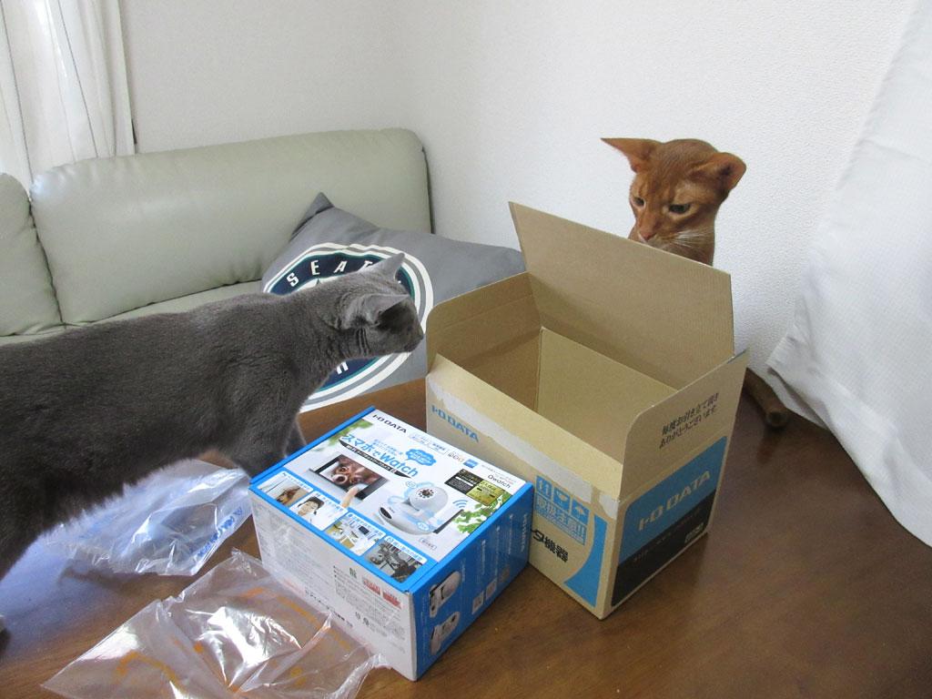 アビのすけが箱に入るかと思った。