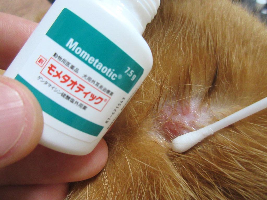 アビのすけの皮膚炎の治療。