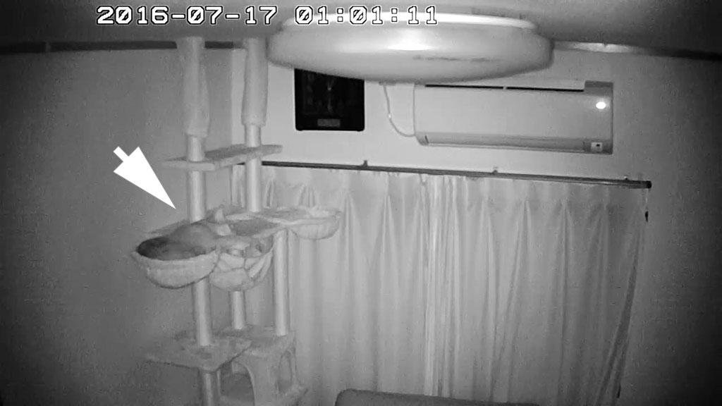 1階のにゃんモックで寝ているアビのすけ。