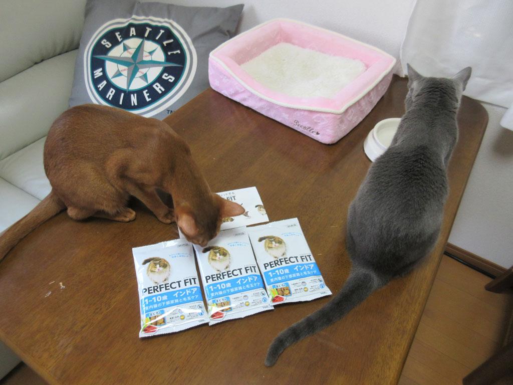 カリカリの試供品と猫たち。
