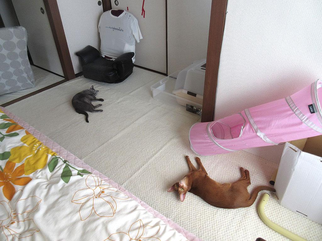 ゴロゴロしている我が家の猫たち。