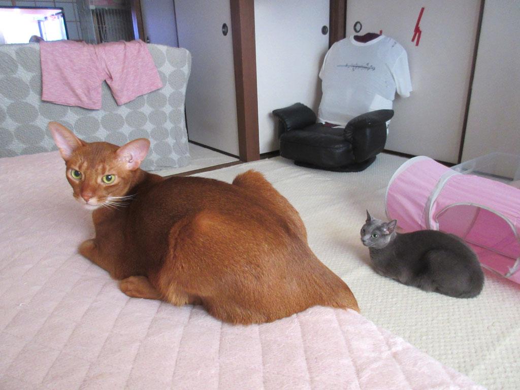 私のかわいい猫たち。