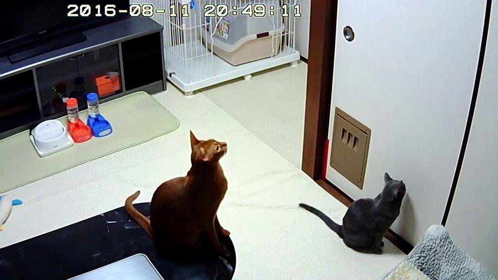 耳が良い猫たち。