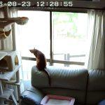 窓際に駆け寄るアビのすけ。